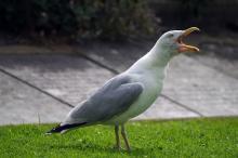 squawk-сервис форекс