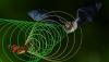 паттерны гартли бабочка и летучая мышь